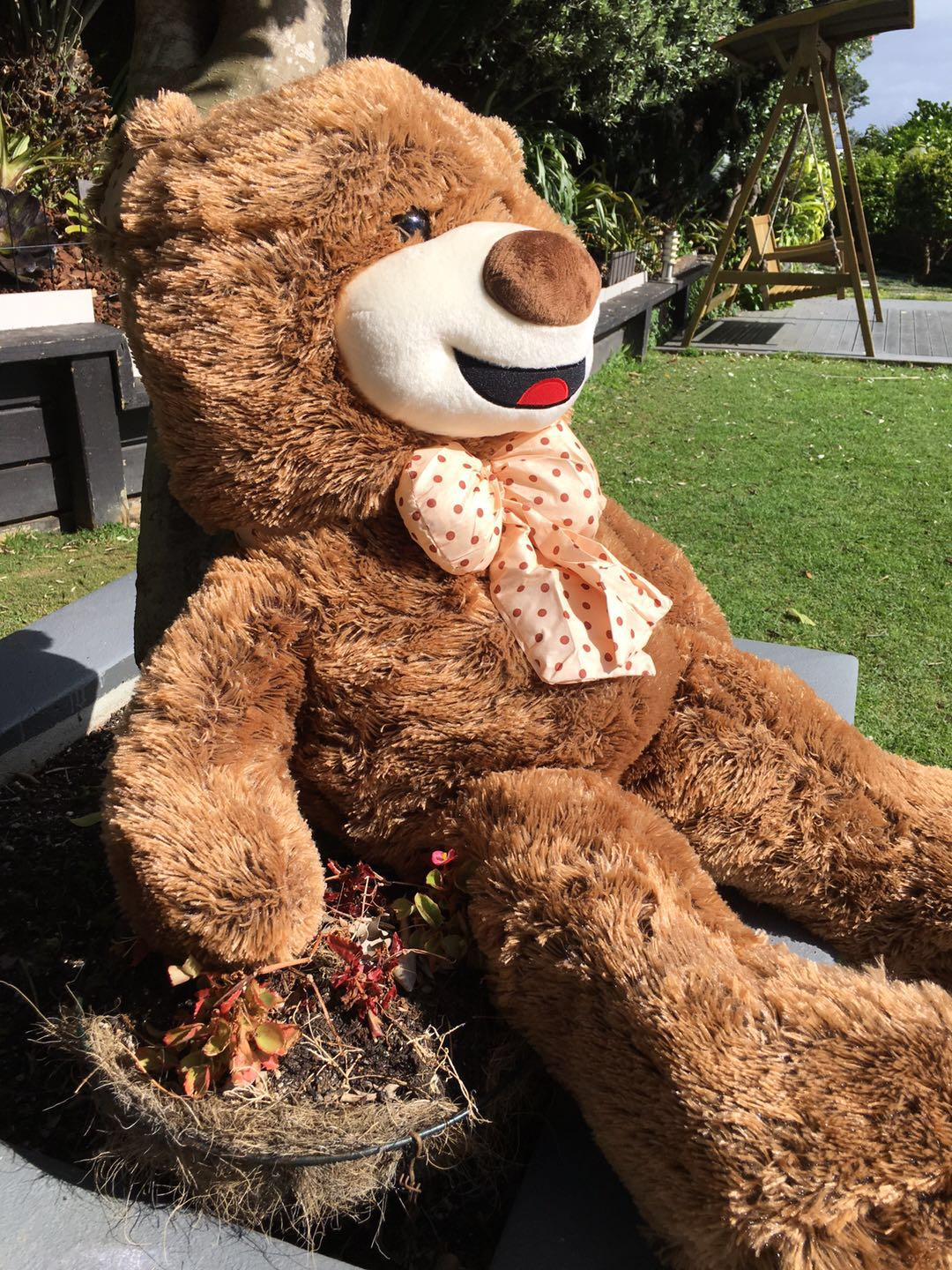 Fluffy Teddy100cms--Dark Brown